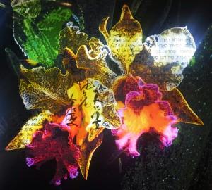 Night Blossoms Refuah